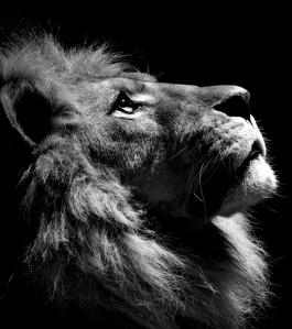 LionWinner