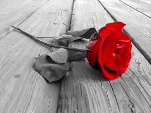 rose-svart-vit-och-röd