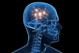 brain_illo_news