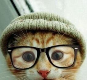 sf-cat