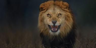 o-LION-facebook